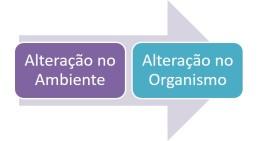 reflexo-inato2