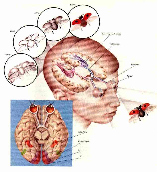 comovemosomundo_c25c325a9rebrocriaimagem