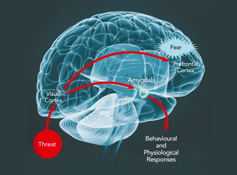 Dr-Joseph-LeDoux-New-York-University-neuroscience.16ef
